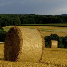 Productores Agropecuarios en régimen de facturación electrónica.